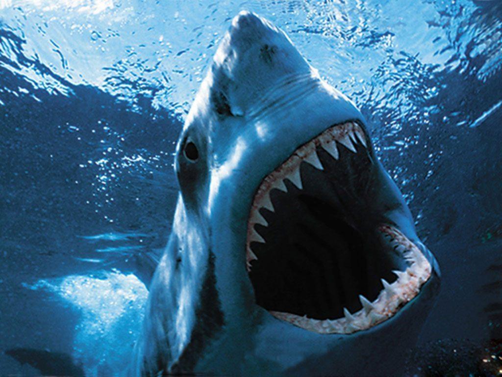 data storytelling rekin atakuje